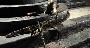 Game of Thrones photo 17