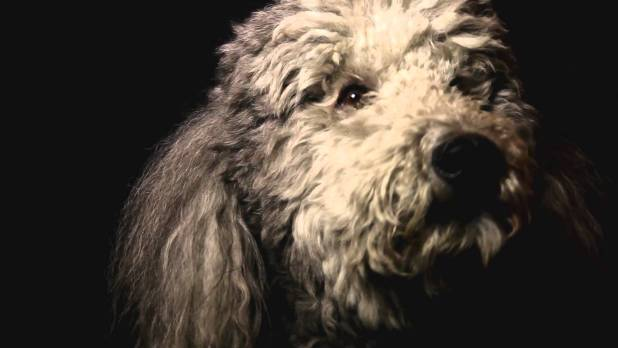 Heart of a Dog Bande-annonce VO